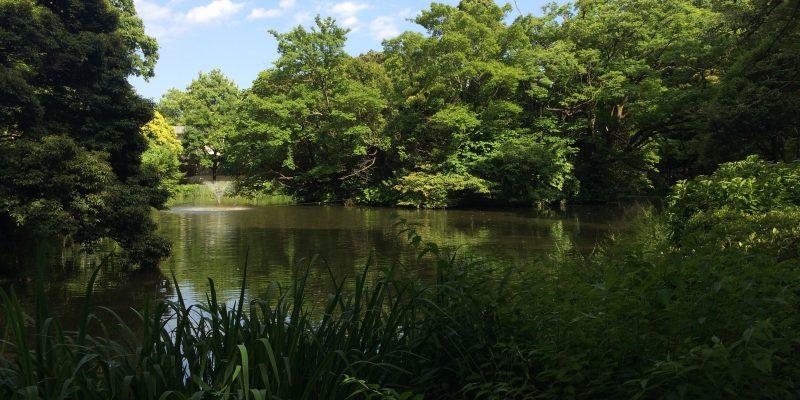 和田堀公園(東京都杉並区)でセミリタイア気分を味わう